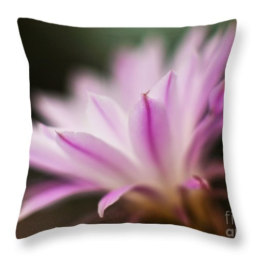 Cereus Throw Pillow featuring the photograph Cereus Glow by Mike Reid