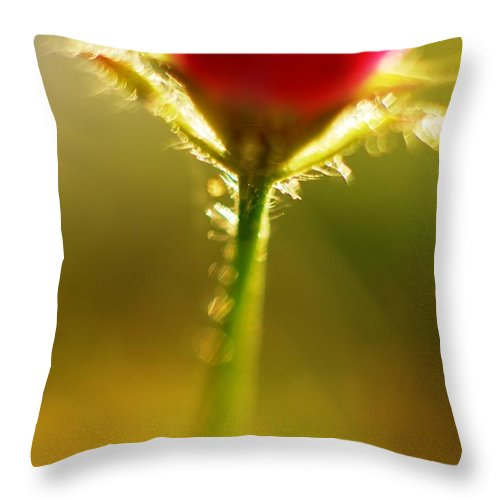 Macro Throw Pillow featuring the photograph Cha Cha Cha Tulip by Catherine Lau