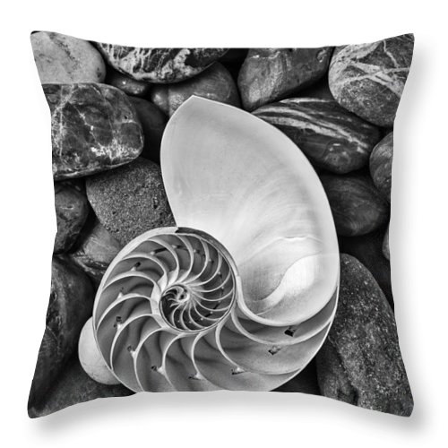 Chambered Nautilus Shell Throw Pillow featuring the photograph Chambered Nautilus Shell On River Stones by Garry Gay