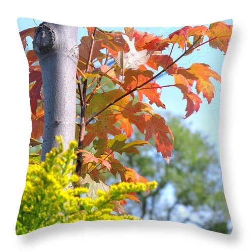 Maple Throw Pillow featuring the photograph Changing Leaves by Ian MacDonald