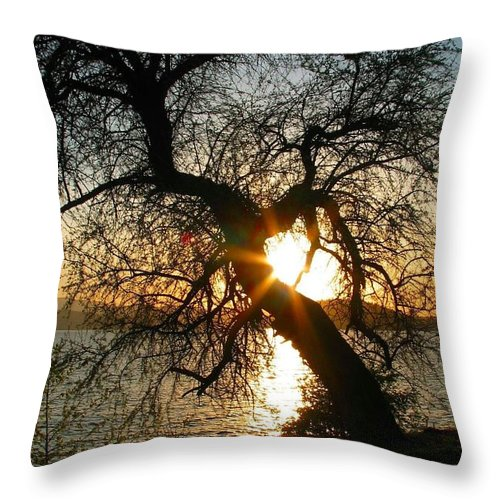 Tree Throw Pillow featuring the photograph Character by Idaho Scenic Images Linda Lantzy