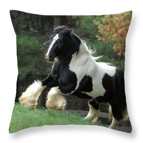 Gypsy Horses Throw Pillow featuring the photograph Charge by Fran J Scott