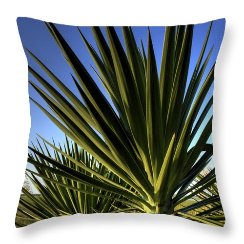 Yucca Plant Blue Skies Chalreston Cactus Dustin Ryan Hdr Lowcountry Folly Beach Throw Pillow featuring the photograph Charleston Yucca by Dustin K Ryan