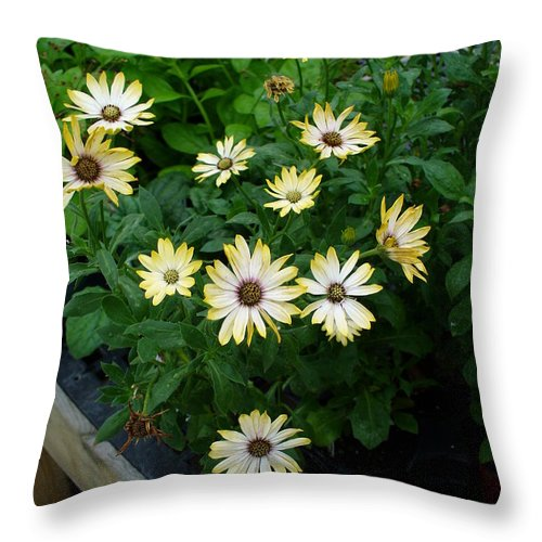 Flowers Throw Pillow featuring the photograph Chatter by Peggy King