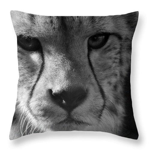 Cheetah Throw Pillow featuring the photograph Cheetah Black And White by Karen Adams