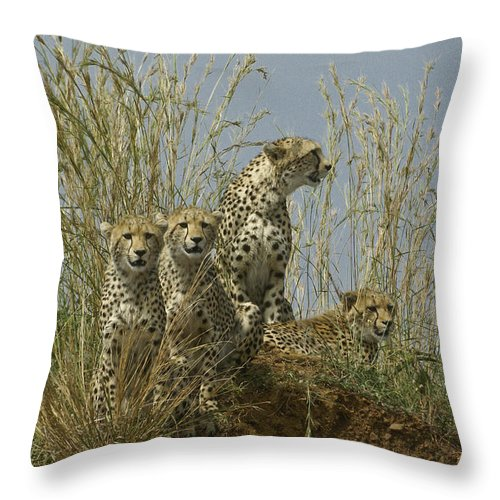 Africa Throw Pillow featuring the photograph Cheetah Family by Michele Burgess