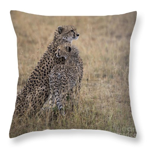 Safari Throw Pillow featuring the photograph Cheetahs by Bryan Pereira