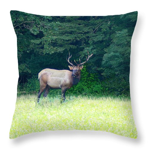 Cherokee Elk Throw Pillow featuring the photograph Cherokee Elk by Seth Weaver