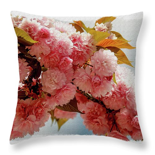 Blossom Throw Pillow featuring the photograph Cherry Blossom by Phil Pace