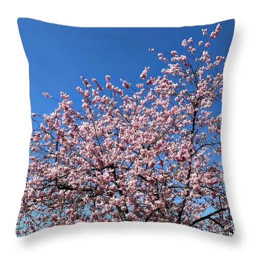 Spring Throw Pillow featuring the photograph Cherry Blossom Pink And Blue Spring Colors by Matthias Hauser