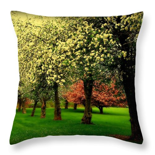 Cherry Blossom Trees Throw Pillow featuring the photograph Cherry Blossom Trees by Angie Tirado