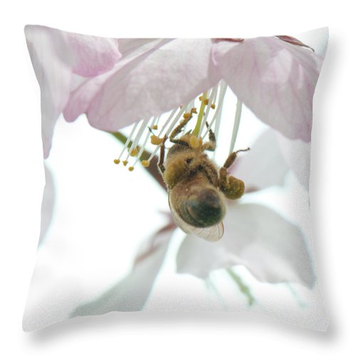 Photography Throw Pillow featuring the photograph Cherry Blossom With Bee by Steven Natanson