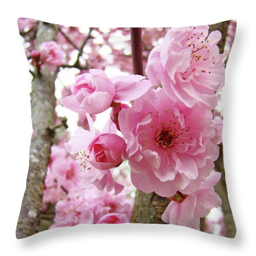 Nature Throw Pillow featuring the photograph Cherry Blossoms Art Prints 12 Cherry Tree Blossoms Artwork Nature Art Spring by Baslee Troutman