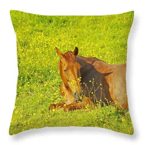 Horse Throw Pillow featuring the photograph Chess Nut Horse by Gary Hancock