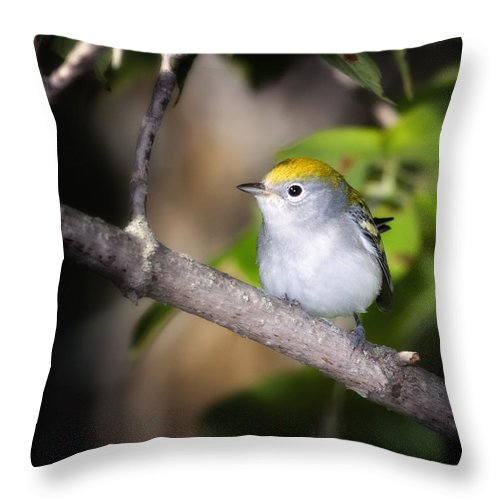 Chestnut-sided Warbler Throw Pillow featuring the photograph Chestnut-sided Warbler by Al Mueller