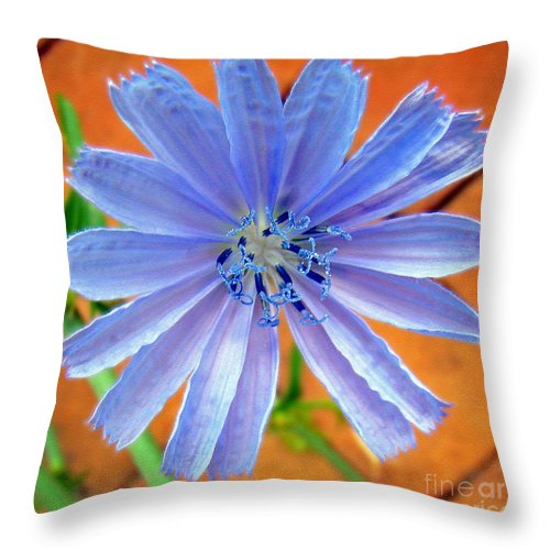Flower Throw Pillow featuring the photograph Chic Chic Chicory by Sue Melvin