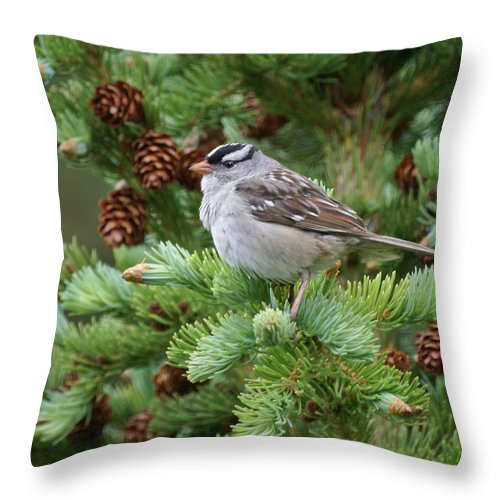 Chickadee Throw Pillow featuring the photograph Chickadee by Heather Coen