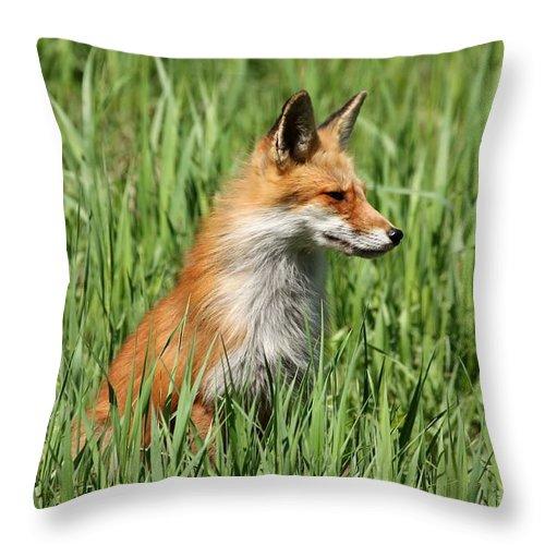 Vixen Throw Pillow featuring the photograph Chillin Vixen by Teresa McGill