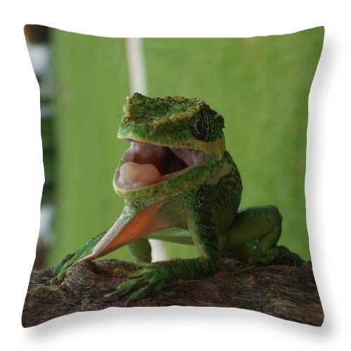 Iguana Throw Pillow featuring the photograph Chilling On Wood by Rob Hans
