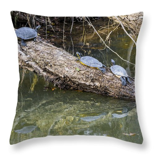 Turtles Throw Pillow featuring the photograph Chilling Turtles by William Hall