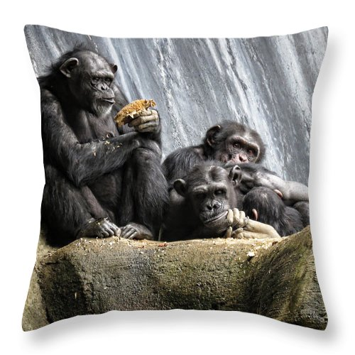 Chimpanzee Throw Pillow featuring the photograph Chimpanzee Snacking On A Sunflower by Helaine Cummins