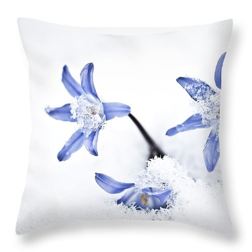 Chionodoxa Throw Pillow featuring the photograph Chionodoxa - Glory Of The Snow by Onyonet Photo Studios