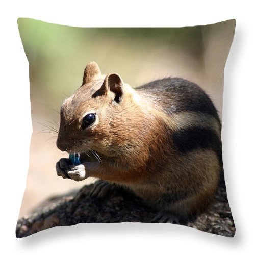 Chipmunk Throw Pillow featuring the photograph Chipmunk Eating A Piece Of Blue Candy by Wendell Clendennen