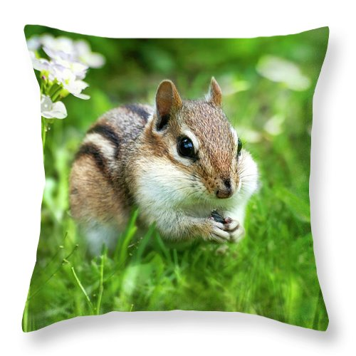 Chipmunk Throw Pillow featuring the photograph Chipmunk Saving Seeds by Christina Rollo