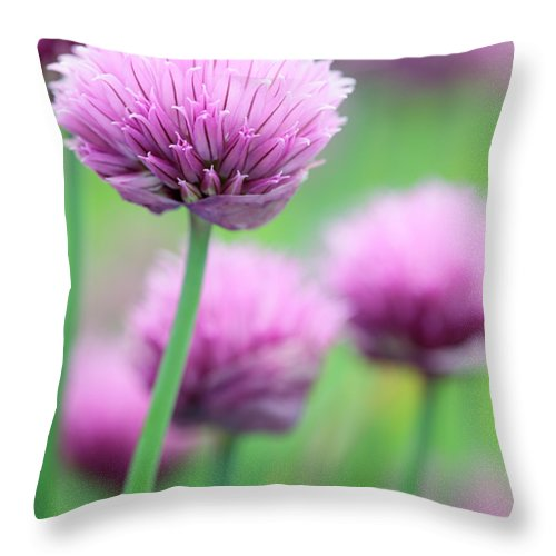 Allium Schoenoprasum Throw Pillow featuring the photograph Chives by Neil Overy