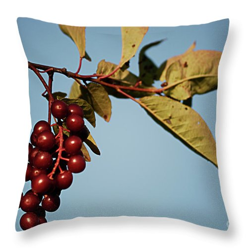 Cherry Throw Pillow featuring the photograph Choke Cherry by Randy Bodkins