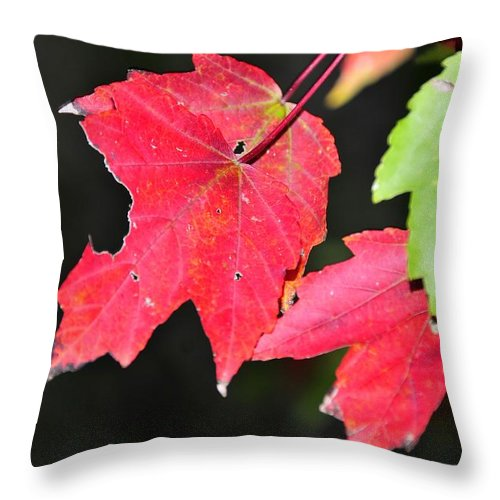Leafs Throw Pillow featuring the photograph Christmas Leafs by David Lee Thompson