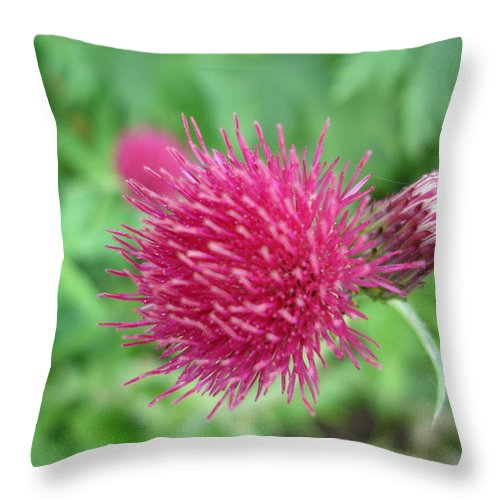 Thistle Throw Pillow featuring the photograph Cirsium Burgandy Thistle by Susan Baker