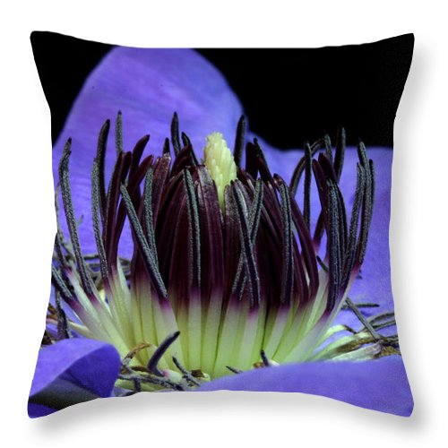 Nature Throw Pillow featuring the pyrography Clematis 8 by Robert Morin