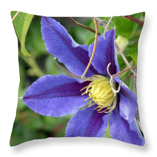 Macro Throw Pillow featuring the photograph Clematis Blossom by William Tasker