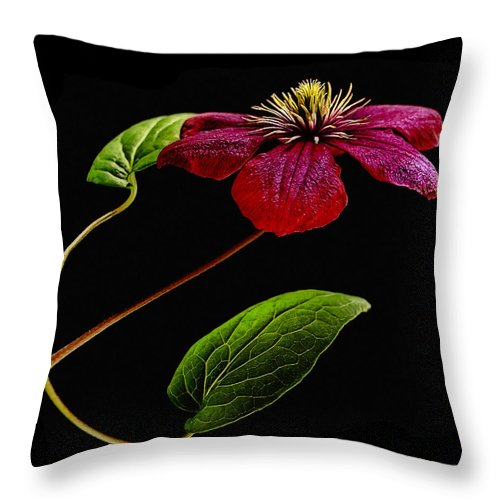 Flower Throw Pillow featuring the photograph Clematis by Joachim G Pinkawa