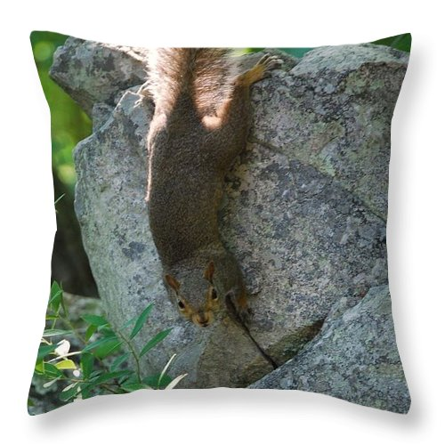 Squirrel Throw Pillow featuring the photograph Cliff Hanger by Eric Liller