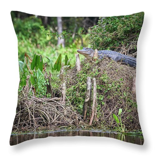 Florida Throw Pillow featuring the photograph Climbing Gator by Bill Chambers