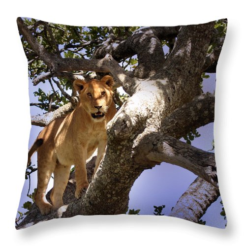 Lioness Throw Pillow featuring the photograph Close Encounters by Joseph G Holland