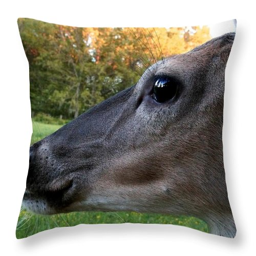 Deer Throw Pillow featuring the photograph Close Up by Bill Stephens