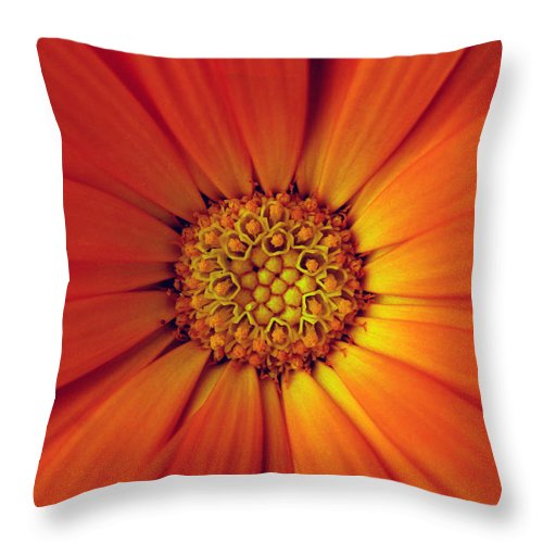 Plant Throw Pillow featuring the photograph Close Up Of An Orange Daisy by Ralph A Ledergerber-Photography