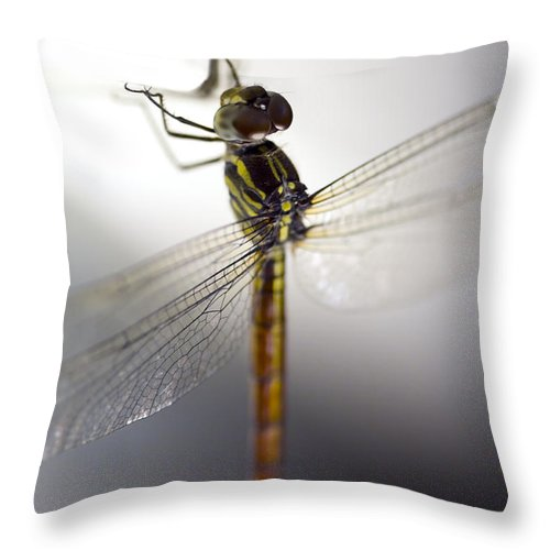 Lightweight Throw Pillow featuring the photograph Close Up Shoot Of A Anisoptera Dragonfly by U Schade