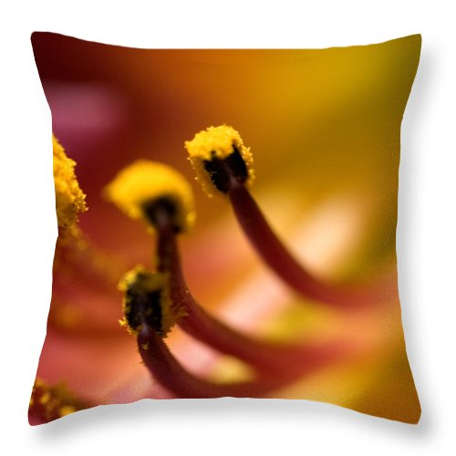 Photography Throw Pillow featuring the photograph Close View Of The Stamen Of A Flower by Todd Gipstein