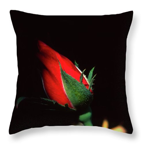 Flower Throw Pillow featuring the photograph Closed To Darkness by Soli Deo Gloria Wilderness And Wildlife Photography