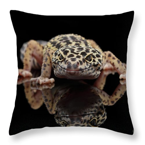 Closeup Throw Pillow featuring the photograph Closeup Leopard Gecko Eublepharis Macularius Isolated On Black Background, Front View by Sergey Taran