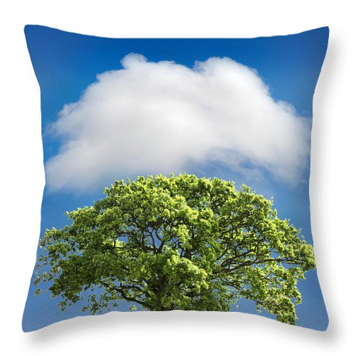 Tree Throw Pillow featuring the photograph Cloud Cover by Mal Bray