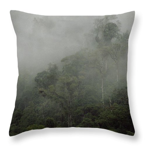 Rainforest Throw Pillow featuring the photograph Cloud Forest by Kathy McClure