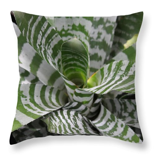 Nature Throw Pillow featuring the photograph Clown by Munir Alawi