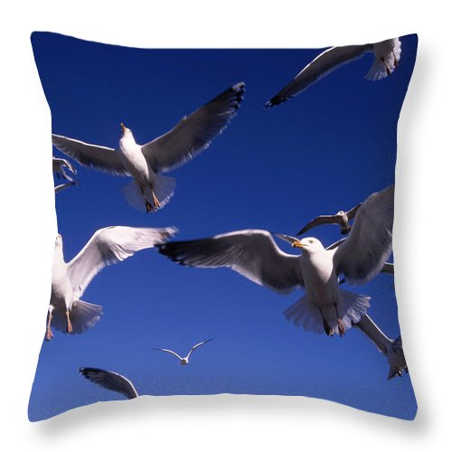Seagull Birds Flight Throw Pillow featuring the photograph Cnrg0302 by Henry Butz