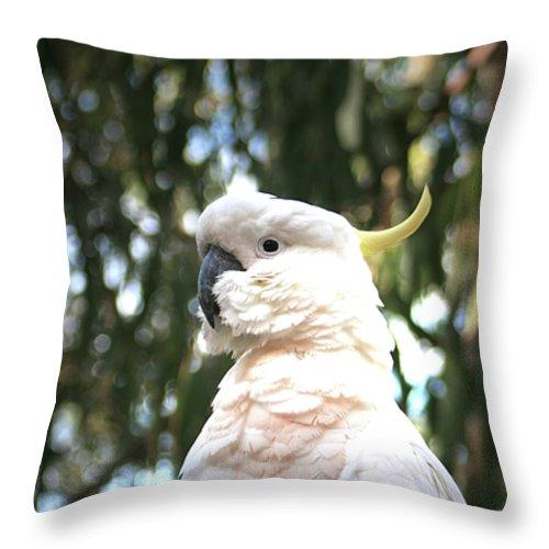 Sulphur Crested Cockatoo Throw Pillow featuring the photograph Cocky 2 by Douglas Barnard