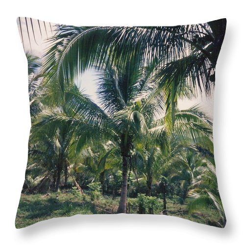 Jamaica Throw Pillow featuring the photograph Coconut Farm by Debbie Levene
